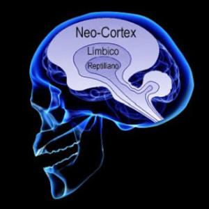 cérebro triunico-1