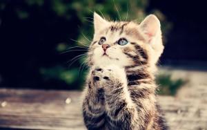gatito-pensando-en-su-novia-y-muy-triste-